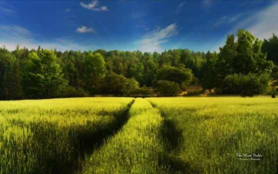 природа, красивые, подборка, пейзажи -, magspace, фоны, wonderful, поле, cvety,