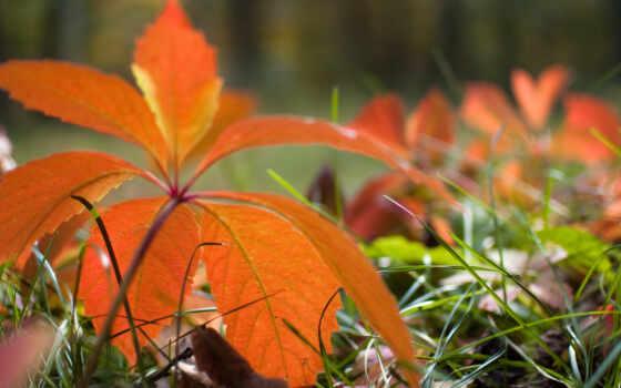 осень, природа, листья Фон № 36866 разрешение 1920x1080