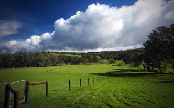 трава, поле, ago