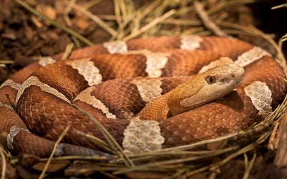 snake, animal, snakes
