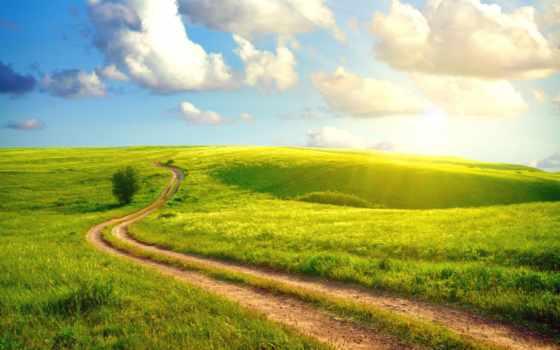 дорога, деревя, priroda