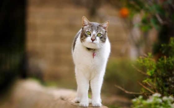 кот, коты, кошки