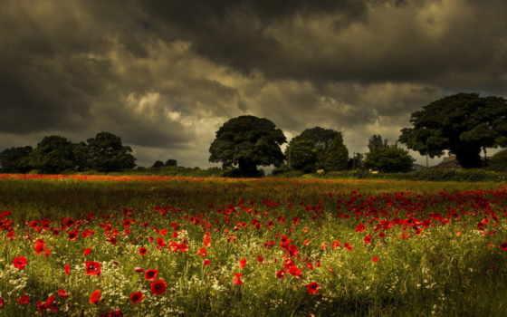 поле, маки, amapolas, fondos, landscape, цветы, природа, gratis, маковое, campos, pantalla,