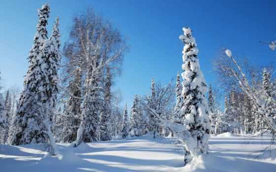 winter, природа, снег, дерево, trees, иней,
