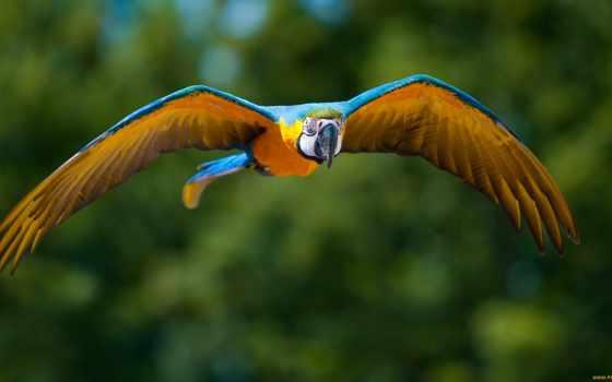 попугай, macaw, попугаев, летит, яndex, length, card, попугаи,