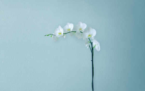 flowers, widescreen, minimal,