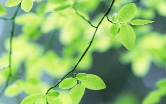 макро, зеленые
