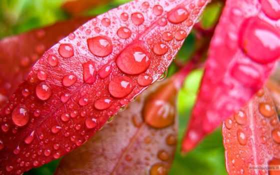 листва, imagesbase, капли, росы, листьях, waters, красных, природа, water,