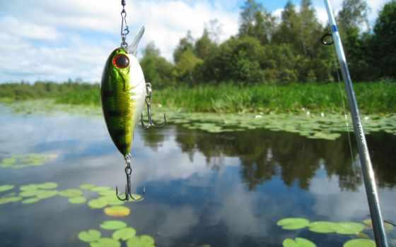 рыбалка, летняя, природа