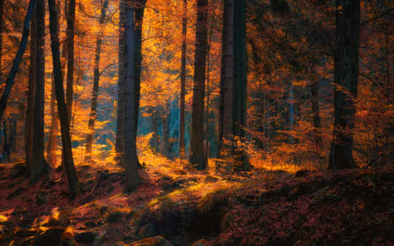 trees, лес, пасть, природа, landscape, sunlight, листья, мох,
