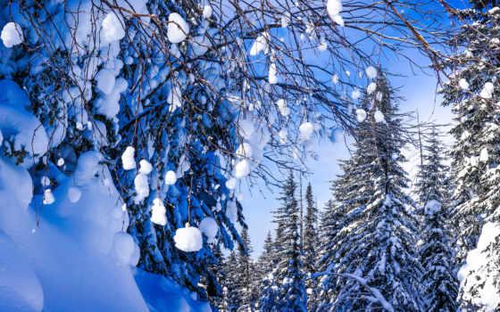 снег, trees, winter, природа, картинка, russian, new, праздники, год, хабаровск, edge,