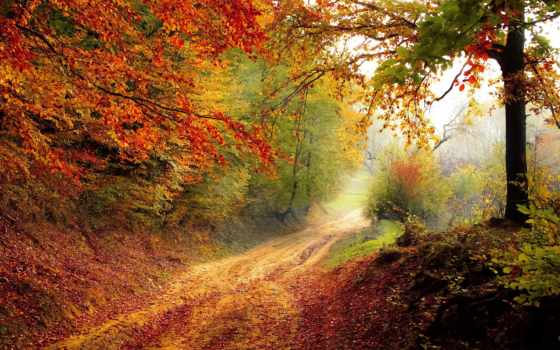 automne, gratuites, paysage, droits, photos, images, des, sur, libres, route,