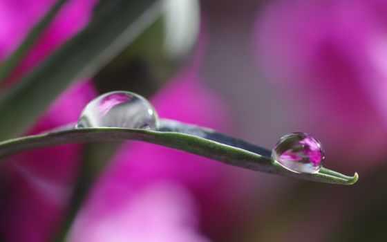 капли, росы, макро, лист, цветах, картинка, красивые, отражение, тона, боке,