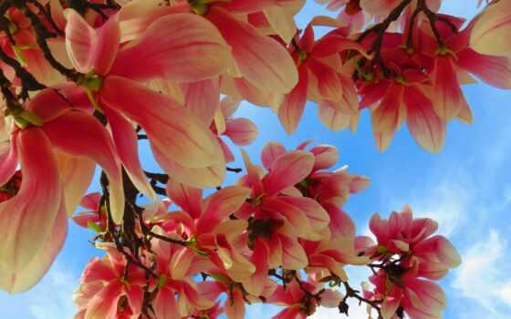 цветение, magnolia, фотообои, grna, доставка