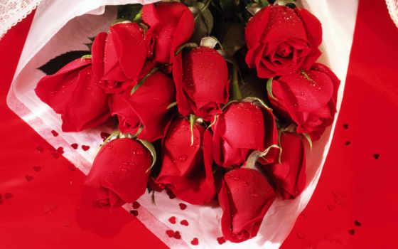 красные, розы, цветы, яркие,