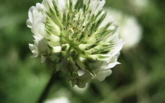 цветок, макро