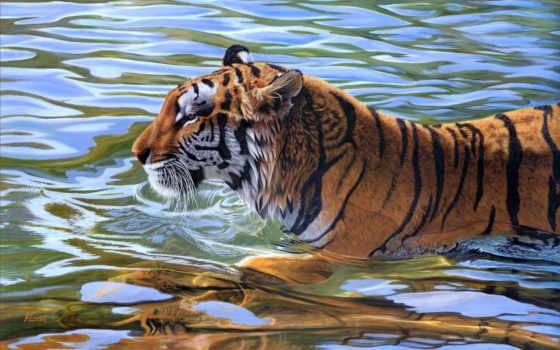 тигр, коллекция, тигры
