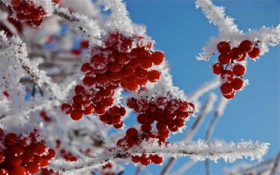рябина, снегу, winter, вышивки, снег, зимняя, автора, дек, природа, олег, алябин,