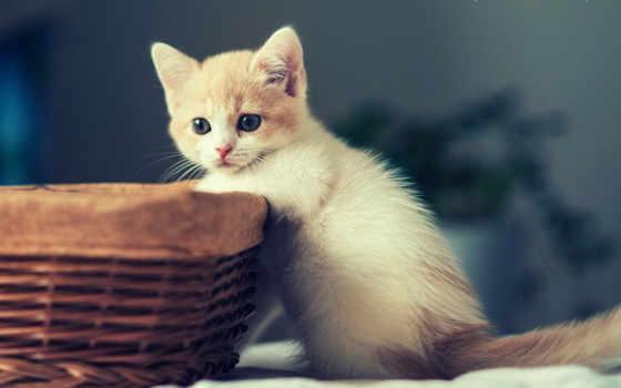 kätzchen, cats, pinterest
