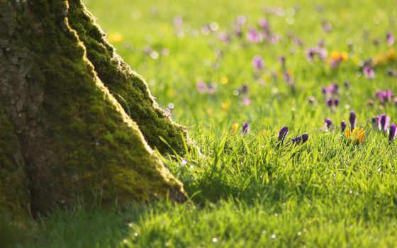 cvety, трава, full, красивые, макро, высокого, весна, природа, дерева, качества,