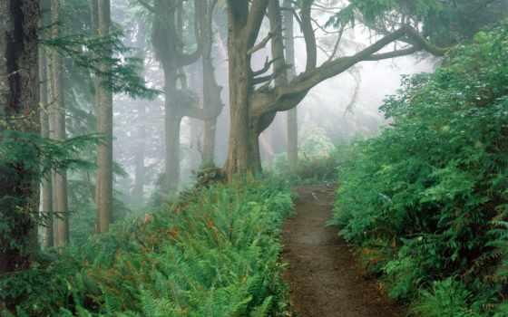 природа, коллекция, пейзажи -, лес, landscape, лесу, тропинка, самое,
