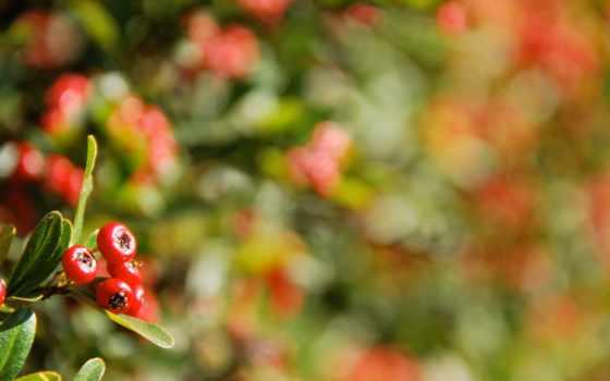 christmas, настроение, макро, photography, растение, красные,