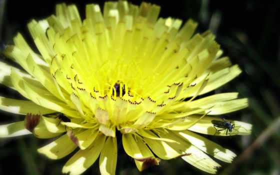 цветы, mobile, природа, iphone, high, standard, definition, wide, widescreen, wuxga,