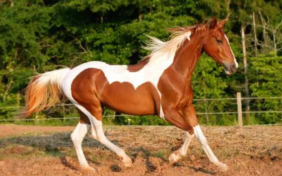 лошадей, породы, известные, самые, пород, мире, всем, их, потребности, людей,