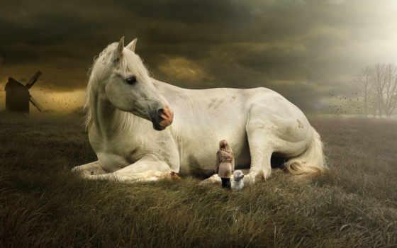 лошадь, white, укладка, down, млекопитающее, animal, free,