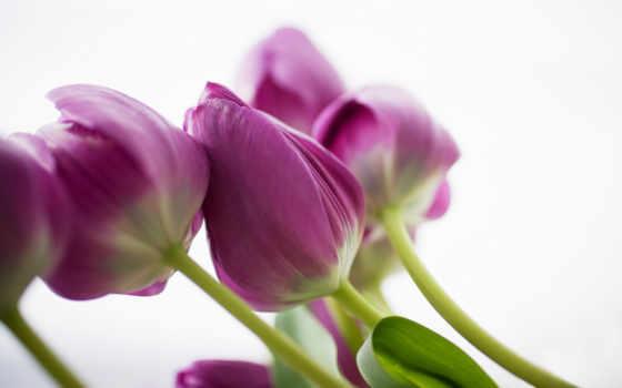 mübarek, olsun, cuma, чакидаҳо, inanchotel, feb, цветы,