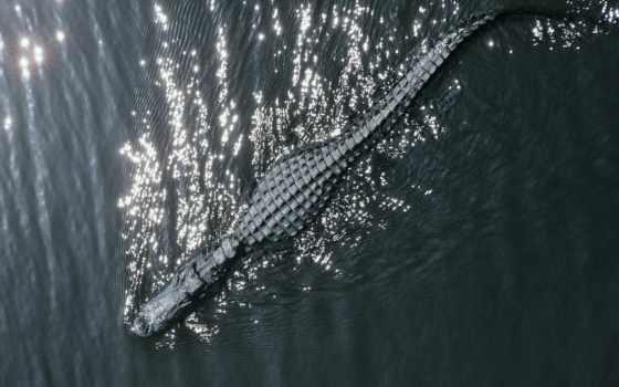 крокодил, zhivotnye, нашем, новом, summerboard, проекте,
