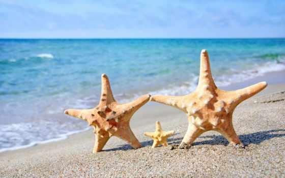 пляж, starfish, море