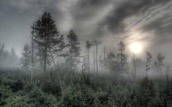 neblina, bosque, bosques, imagens, papel, parede,