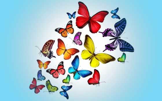 бабочки, рисунок, оптом, рисунки, мебели, живые, купить, бабочек, раскраски,