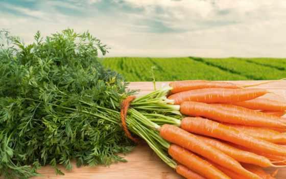морковь, еда, картинка, молодая, поле, bundle, store, морковное, ха, моркови, description,