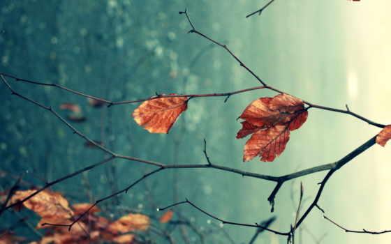 листва, ветки, природа, макро, осень, высоком, качестве, базе, сухие, нояб,