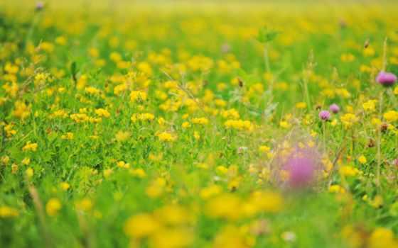 flora, foto, verde, alta, flor, agricultura, campo, césped,