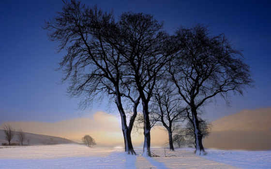 снег, природа, winter, images, desktop, trees, dual, лес, экран,