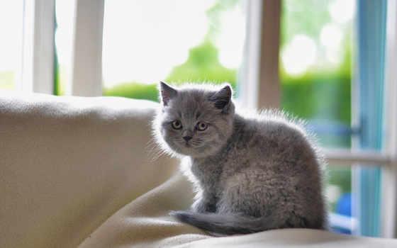 new, микс, животные, documentary, разрешения, высокого, goo, rar, котенок, сидит, cat, часть, июня, mixed, фоне,