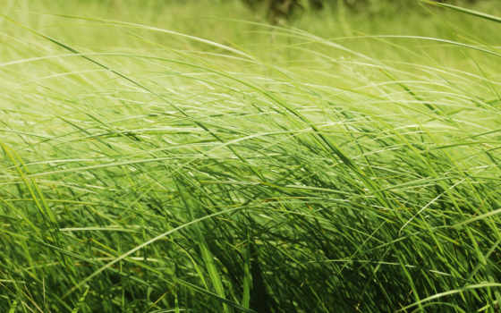 трава, макро Фон № 32022 разрешение 1920x1080