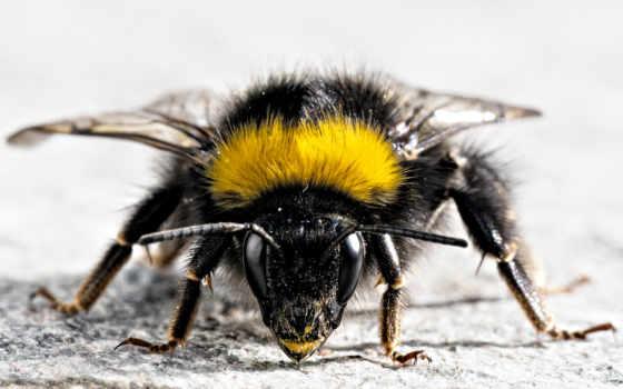 пчела, усики, devushka