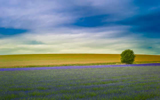 lavender, ферма, поле, hitchin, serendipity, англия, hertfordshire, поля,