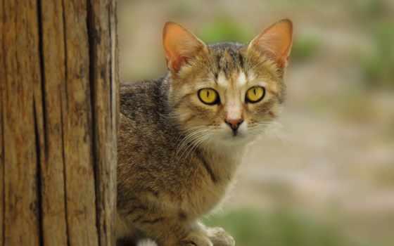 кот, pinterest, images, whoa, pin, trisha,