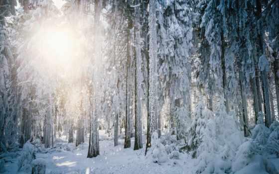 лес, winter, лесу, яndex, утро, зимнем, пользователя, коллекция, коллекциях,