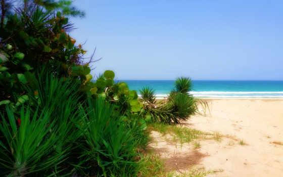 пейзаж, florida, atlantic, ocean, деревья, закат,