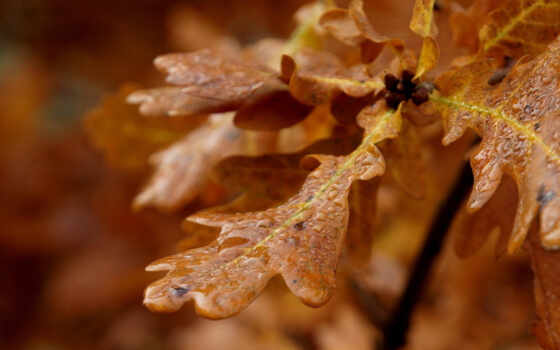 макро, капли, листья