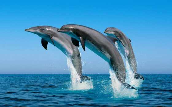 dolphins, jumping, water