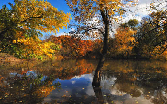 осень, природа, деревя Фон № 98545 разрешение 1920x1080