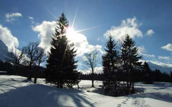 winter, лесу, лес