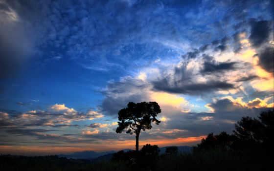 небо, красивое, дерево